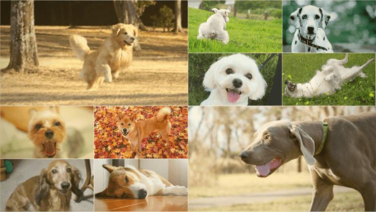 犬種の10グループ