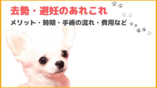 犬の去勢・避妊手術