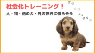 犬の社会化トレーニング