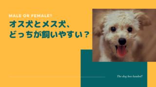 【口コミあり】オス犬とメス犬、どっちが飼いやすい?性格&特徴など