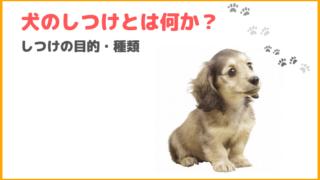 《犬のしつけ》目的・種類は?しつけがうまくいかない方は必見です。