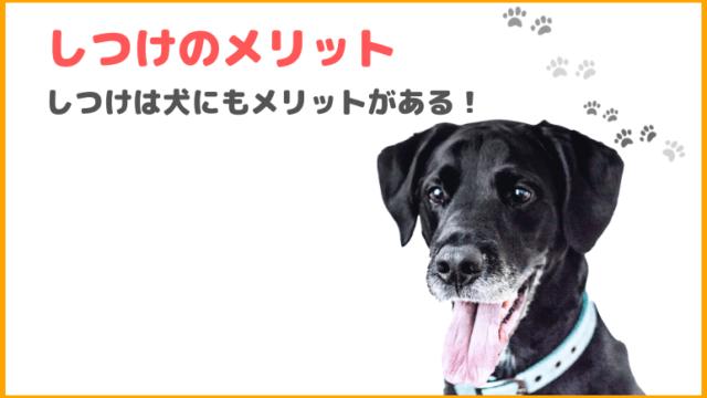 【犬をしつけるメリットとは】しつけをすると得られるメリットを紹介