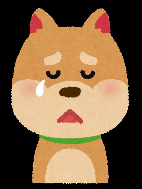 無視された犬