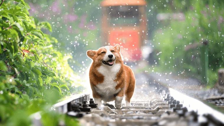 【具体例】犬の問題行動の「原因解明プロセス」