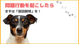 【犬のしつけ】犬が問題行動を起こしたら、まずは「原因解明」を。