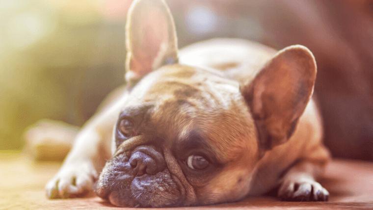 犬が問題行動を起こしたら、まずは「原因解明」を