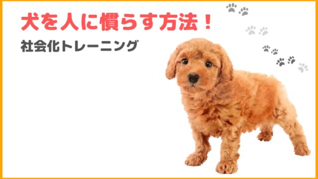 《犬の社会化》人に慣らす方法!人を怖がる、嫌う犬にしない為に