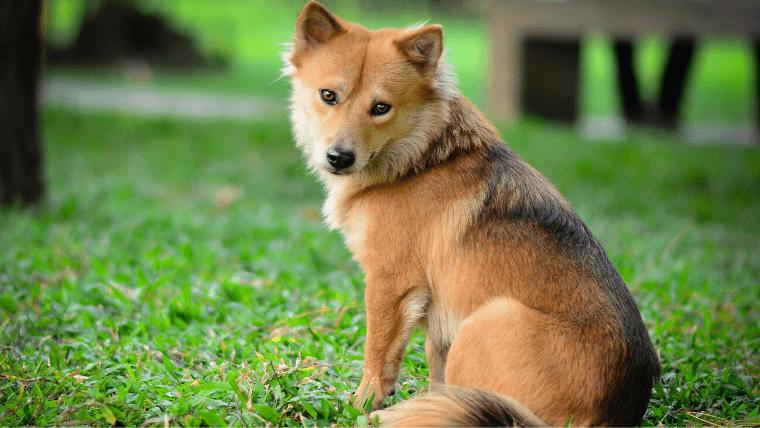 犬に人慣れさせる時の注意点