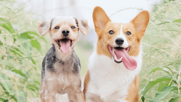 犬に人慣れさせる方法