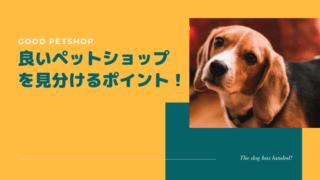 【選び方】良いペットショップを見分けるポイントを7つ紹介!