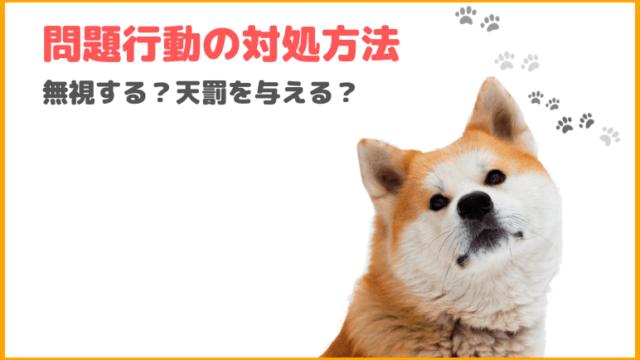 【犬のしつけ】犬が問題行動を起こした時の対処方法を5つ紹介!