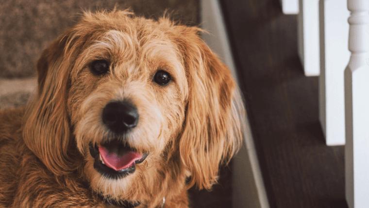 犬が問題行動を起こさないように普段から心がけること