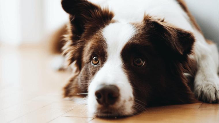 犬が不安や恐怖を感じている時の接し方